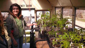 Pam's husband bought an old bus for the motor. They converted the body into a heated greenhouse